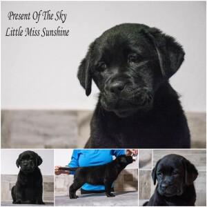 Little Miss Sunshine *Emmy*