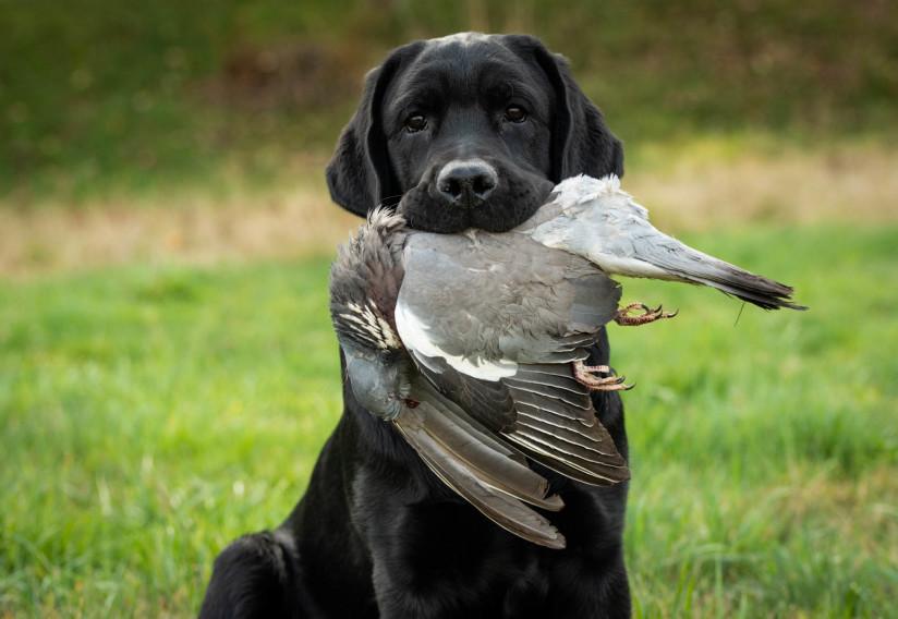 Jagd Boss&Mary (11 von 23)